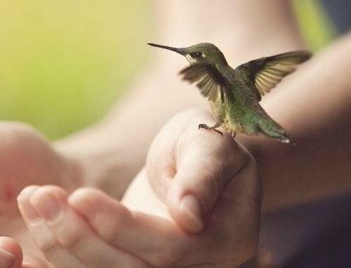 mani-colibri