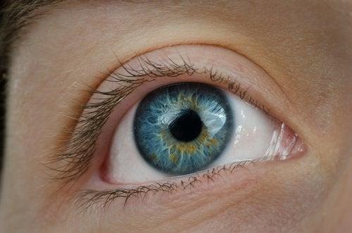 degenerazione maculare e perdita della vista