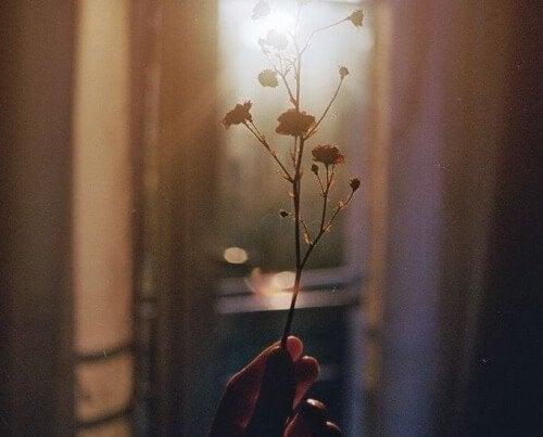 Ramo di fiori controluce