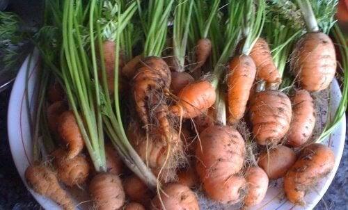 carote-2