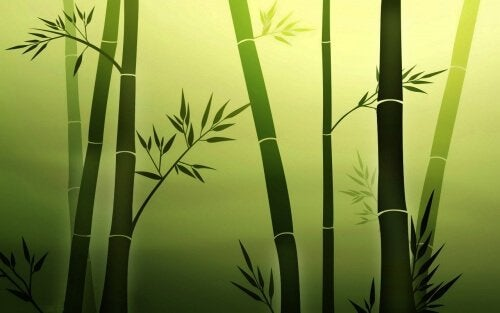 bamboo-persone-resilienti