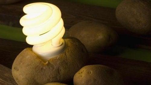 Una patata: scoprite come illuminare la vostra stanza