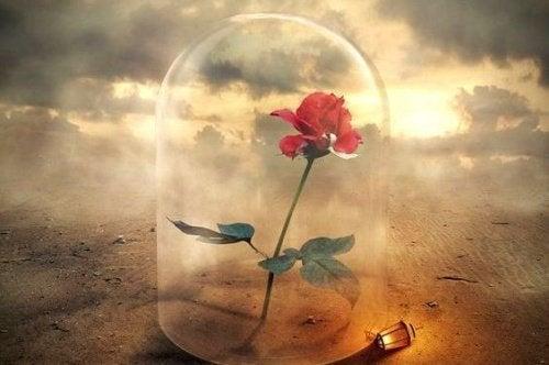 Le anime più forti sorgono dalle ceneri della sofferenza