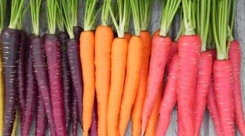 Carote viola arancioni e rosse