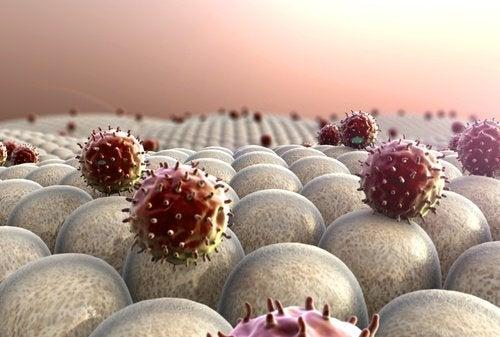 cellule cancerogene sui tessuti