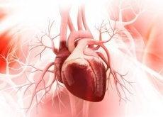salute cardiovascolare