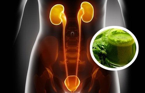 2 frullati diuretici che vi aiuteranno a depurare i reni