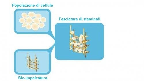 cellule staminali
