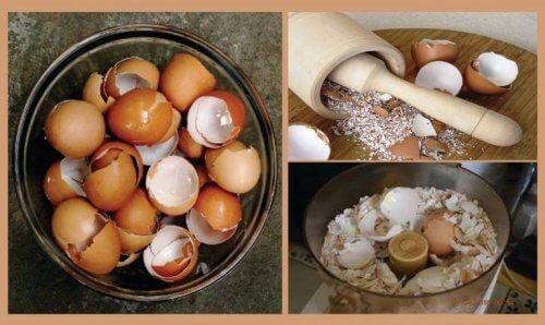 Il guscio d'uovo per 6 importanti rimedi