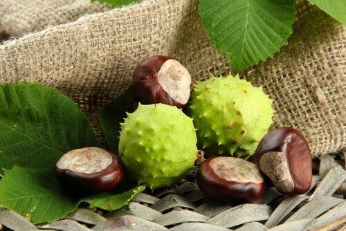 frutti e semi di ippocastano
