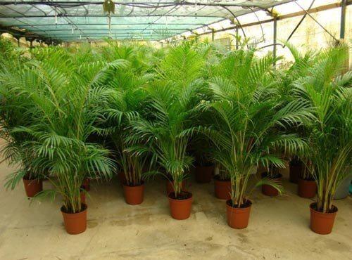 8 piante che purificano l 39 aria di casa vivere pi sani - Piante che purificano l aria in casa ...