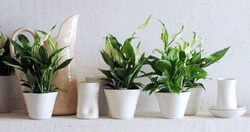 piante-e-vasi-bianchi