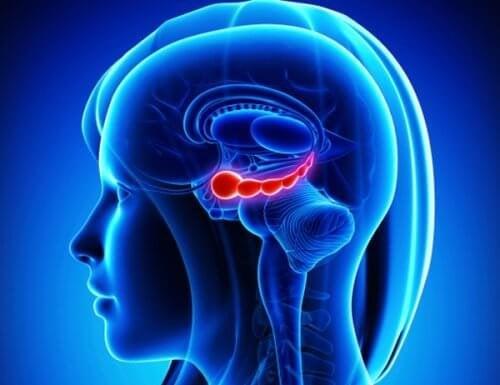 le noci sono un ottimo nutriente per il cervello