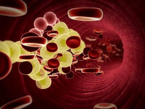 flusso del sangue