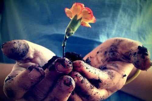 L'amore va coltivato perché fiorisca ogni giorno