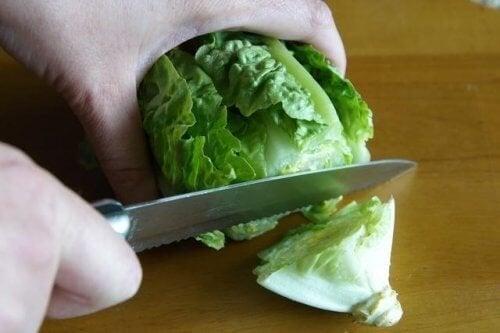 lattuga tra gli alimenti che si possono congelare
