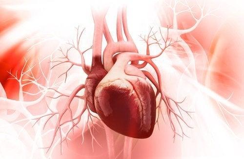 il succo di mirtillo migliora la salute cardiovascolare