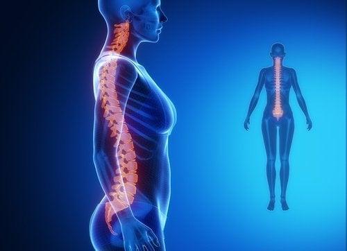 Come allungare la colonna vertebrale in soli due minuti