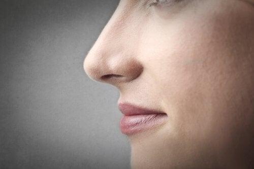 naso e volto di profilo