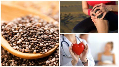 9 interessanti benefici dei semi di chia