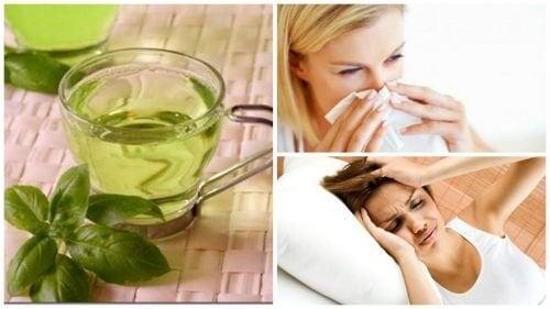 8 benefici del tè al basilico: ecco perché berlo