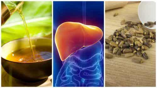 La steatosi epatica si cura con 6 trattamenti naturali