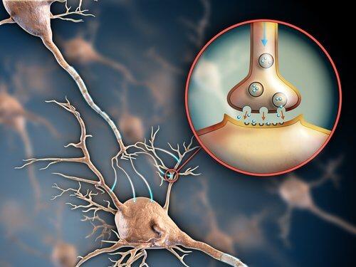 compito del sistema nervoso