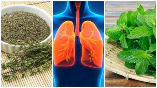 8 erbe per migliorare la salute dei polmoni