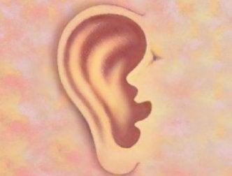 Le orecchie rivelano il nostro stato di salute
