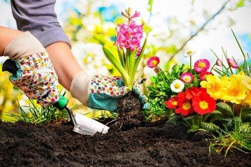 Donna che fa giardinaggio