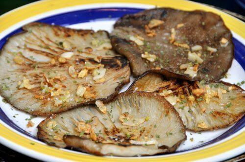 Rafforzare il sistema immunitario con il fungo ostrica