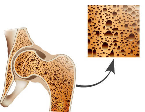 interno delle ossa