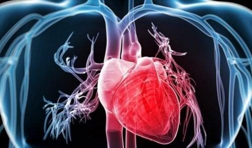 funzionamento cuore umano