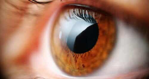 La vista: uno strumento per individuare 5 disturbi