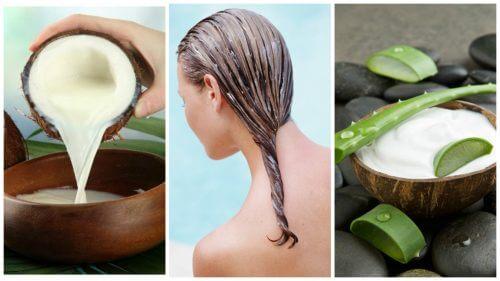 Trattamento all'aloe e cocco contro la caduta dei capelli