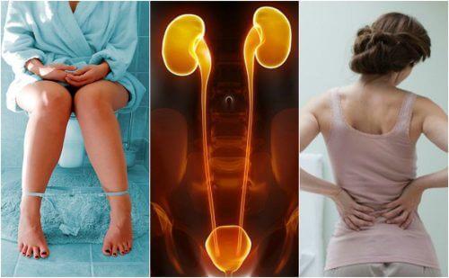 Disturbo ai reni: 7 sintomi per identificarlo in fretta