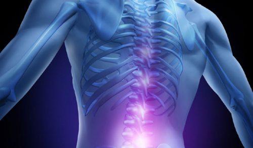 microfibre per riparare lesioni spinali