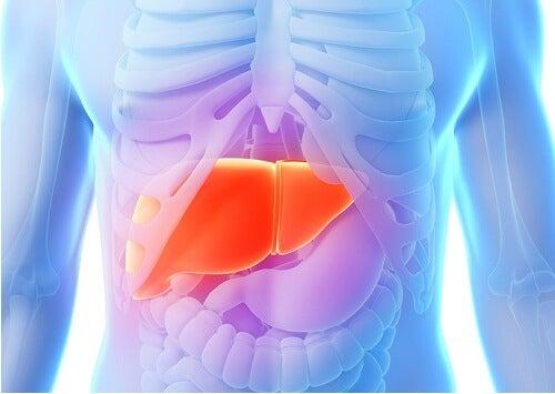 la dieta del carciofo contribuisce ad avere un fegato più sano