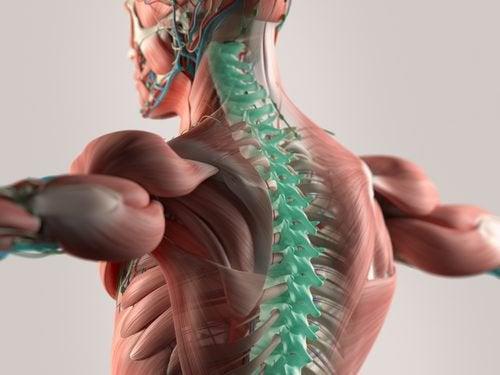 Microfibre: nuova frontiera per riparare il midollo spinale