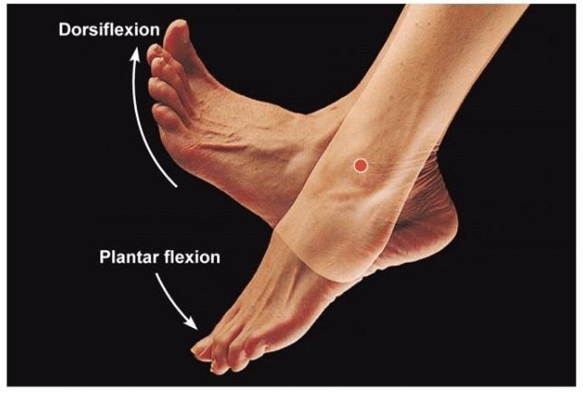 Distorsione della caviglia: movimento della caviglia.