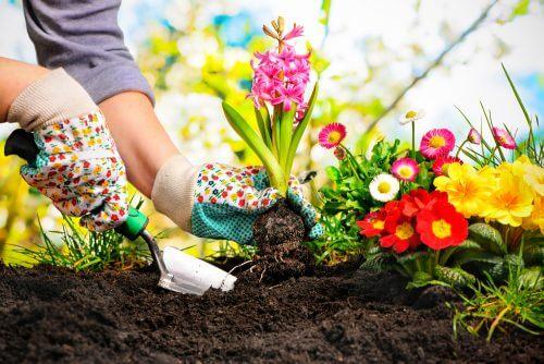 5 idee originali per un mini giardino in casa