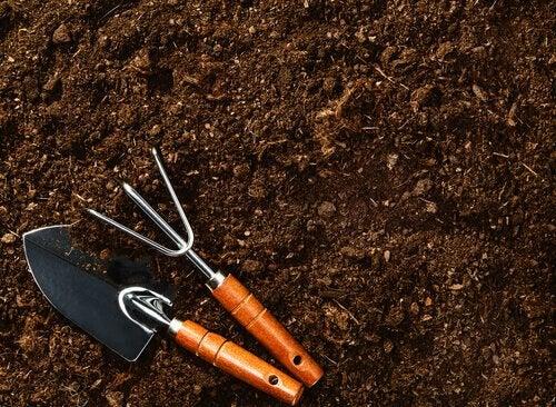 Terreno in cui coltivare i mirtilli