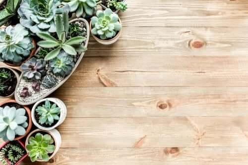 Mini giardino in casa: consigli per crearne uno