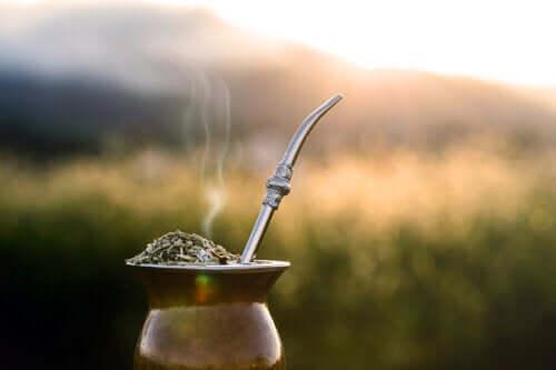 Yerba mate: l'erba che aiuta a perdere peso