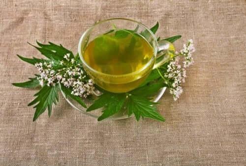 5 erbe medicinali per trattare la depressione