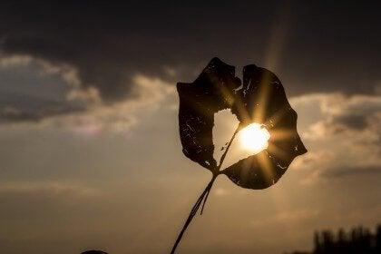 foglia bucata in controluce con dietro il sole