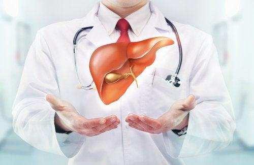 Medico con in mano un fegato