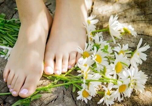 proprietà medicinali della camomilla - piedi e margherite