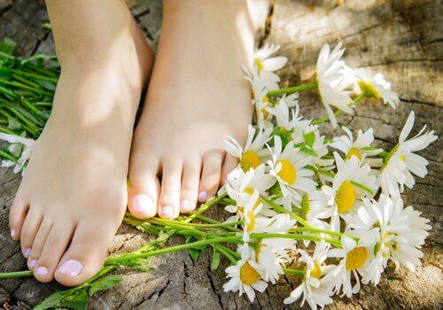 piedi e margherite