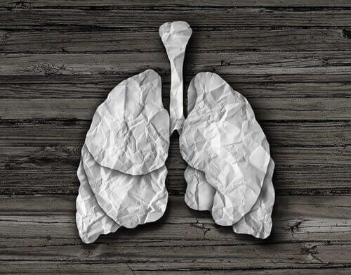 Polmoni di carta